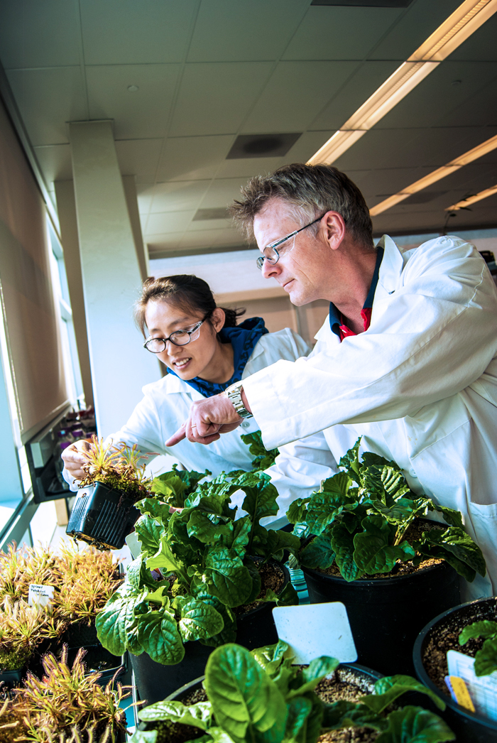 Two researchers looking at plants