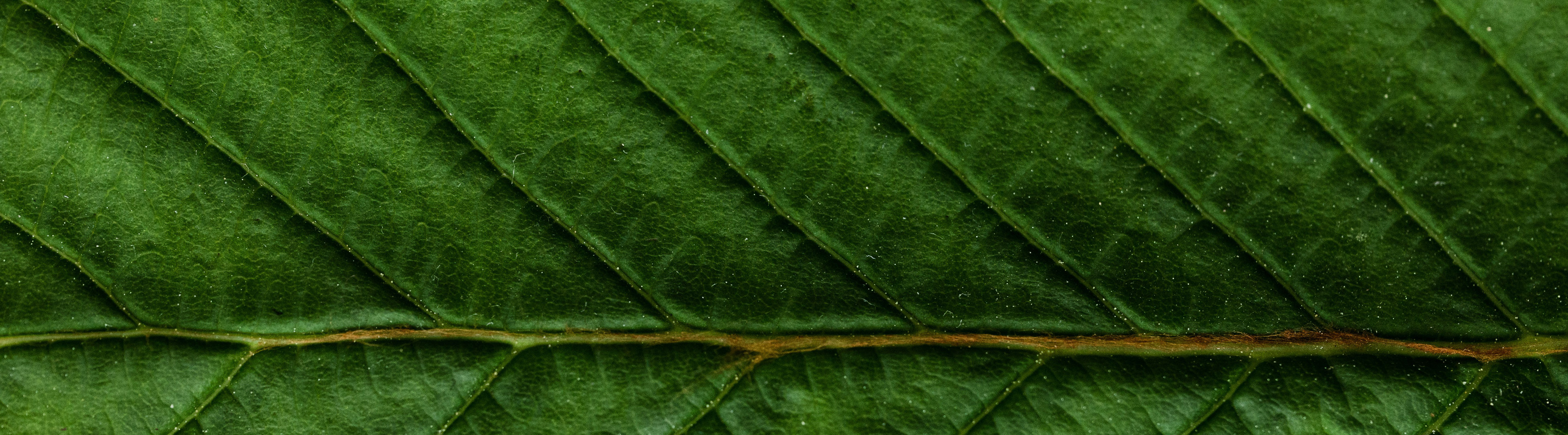 closeup of the veins on a leaf