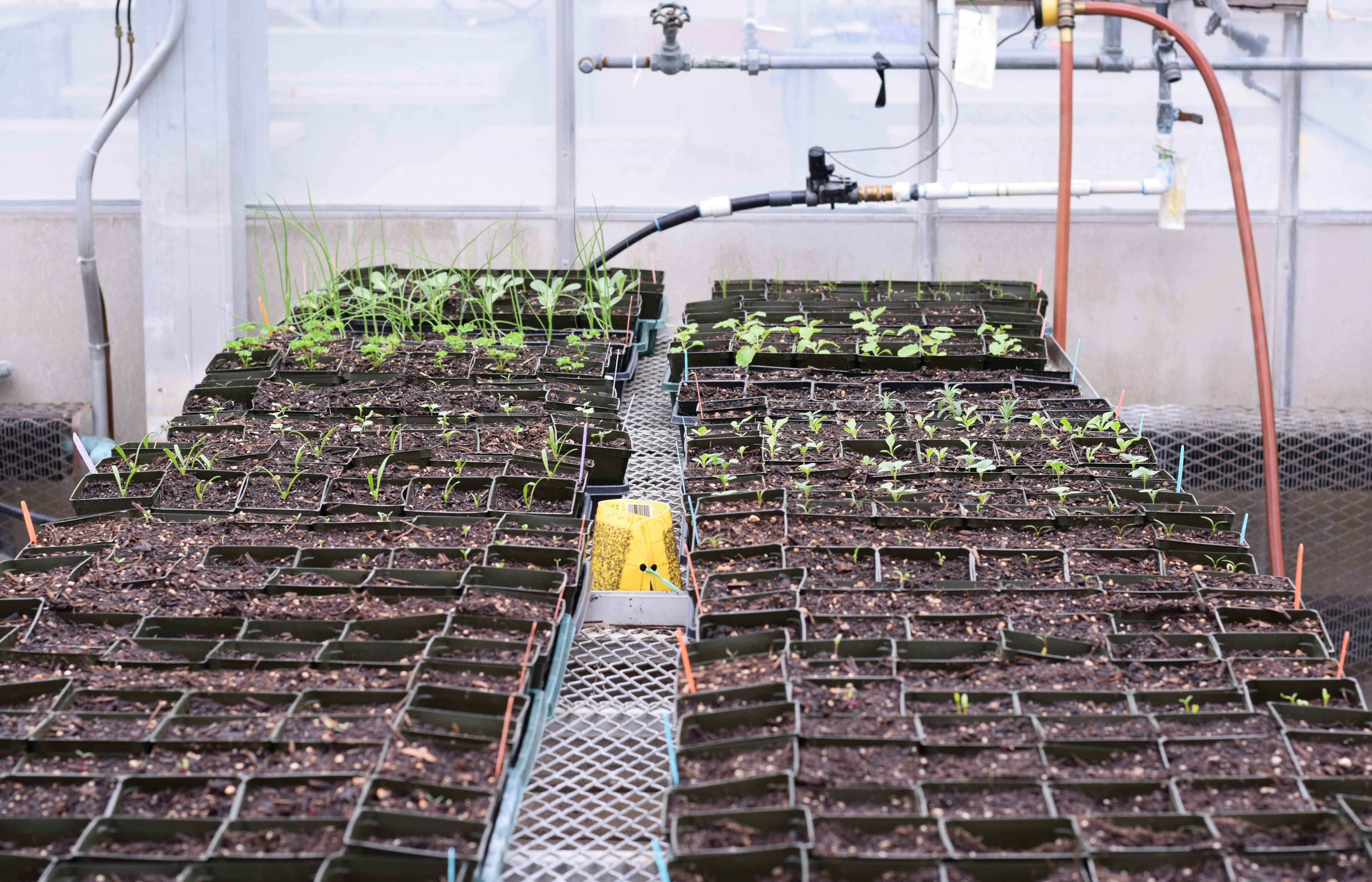 research plants in a greenhouse