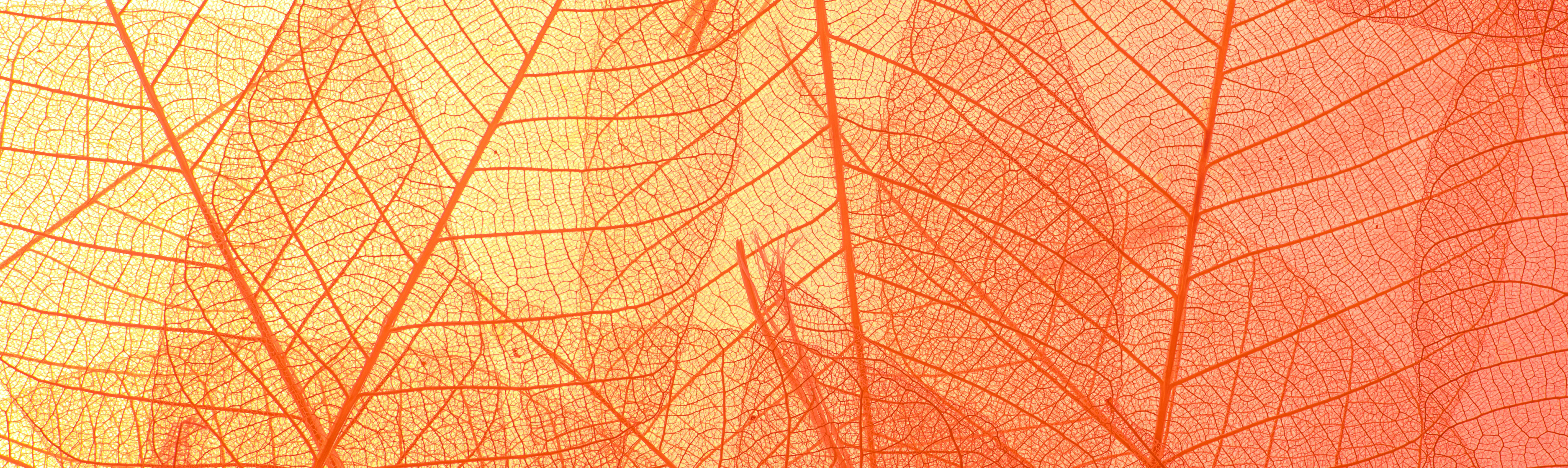 an image of colorful leaves
