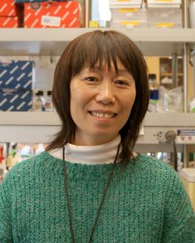 Keni Jiang