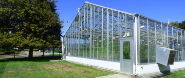 A greenhouse, clear, next to a large, gumdrop-shaped tree.