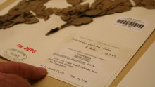 A manzanita specimen from 1936 housed at the University and Jepson Herbaria at the University of California, Berkeley. Credit: John Upton/Climate Central