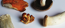 mushrooms image by Christine Liu