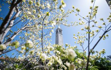 Flowers in the front field with the campanile in the background
