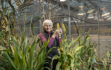 Peggy Lemaux in her greenhouse holding sorghum plants
